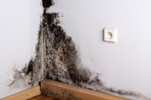 Mold inspection red deer