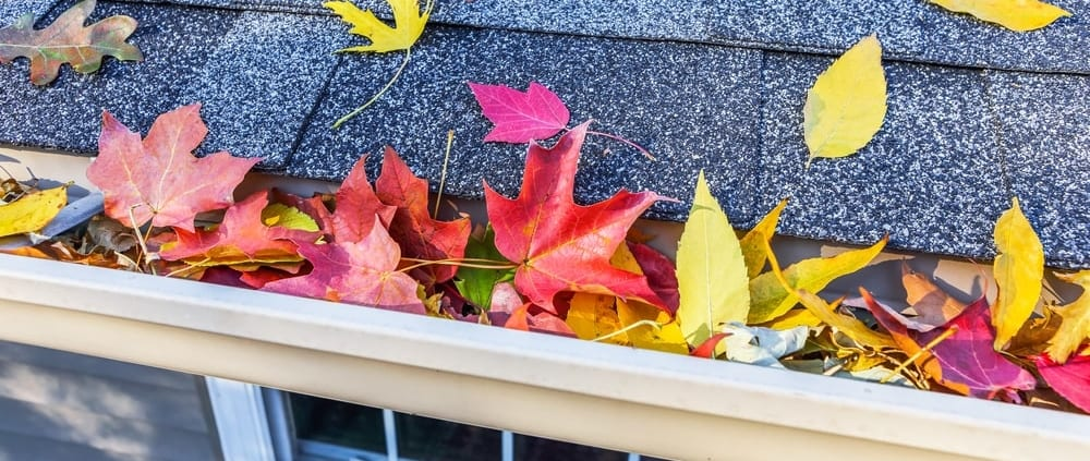 fall leaves in gutter